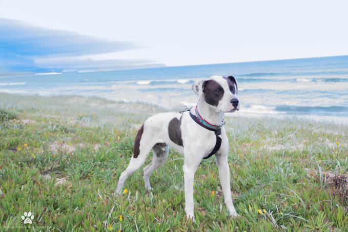 7fa10dd4644c Adopt. Give a dog ...
